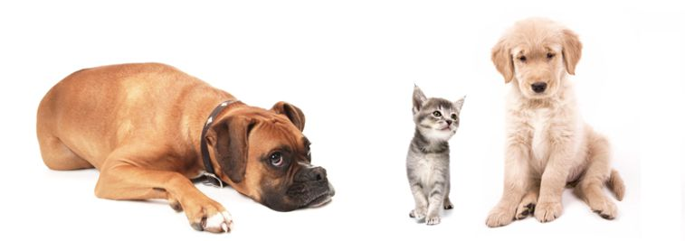 id e cadeau utile m daille pour chien ou chat. Black Bedroom Furniture Sets. Home Design Ideas